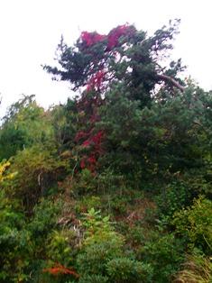 beskjæring av frukttrær om høsten